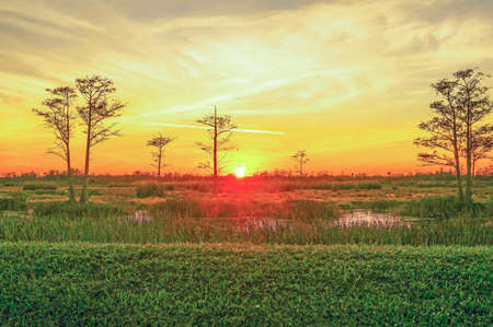 landscape of a swamp sunset in the wetlands