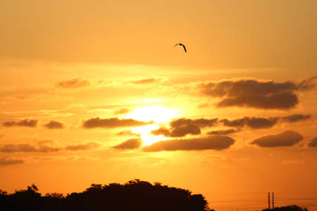 Black silhouette of bird with wings expanded flying in the summer sunrise sky.