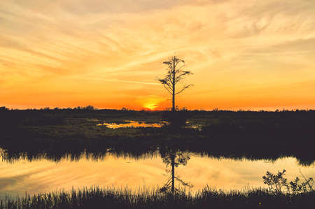 reflections of a sunset in the Florida swamps