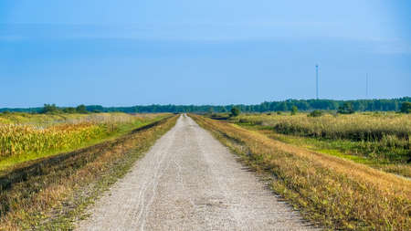 Long straight gravel path in the Florida Everglades. Stock fotó