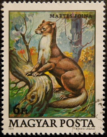Postal stamp. The Beech Marten, also known as the Stone Marten