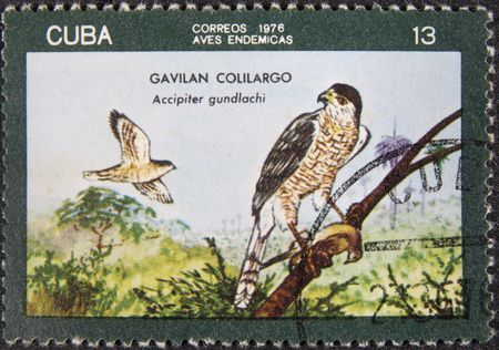 accipitridae: CUBA-CIRKA 1976: Postal stamp CUBA cirka 1976. Gundlachs Hawk is a species of bird of prey in the Accipitridae family. It is endemic to Cuba. Stock Photo