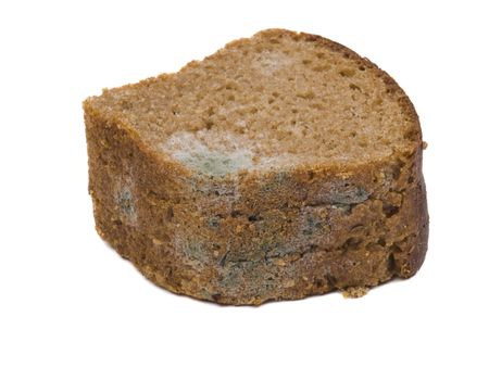 mold on stale bread