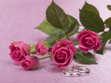 Silver wedding rings  and roses on a pink background
