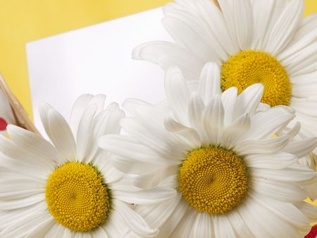 Card for text and camomile photo