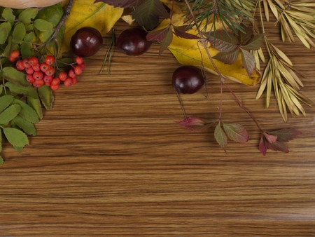 sorbus: Background with leaves and berries of sorbus  Stock Photo