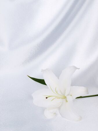Lily on a background white silk Stock Photo