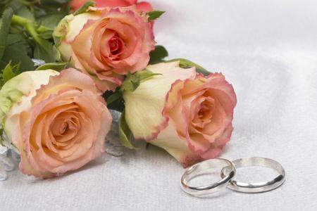 Beautiful rose on a background white silk Stock Photo