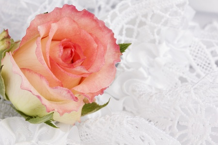 Background from white silk with a lace and rose photo