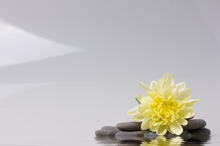 plainness: yellow flower and a smooth sea stones