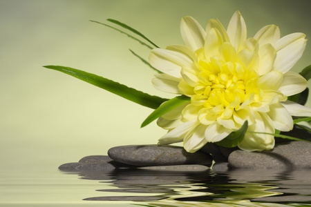 yellow flower and a smooth sea stones
