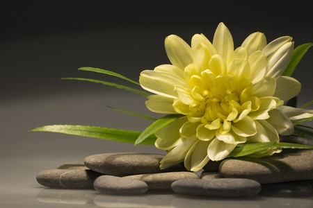 yellow flower and a smooth sea stones Stock Photo - 10592928