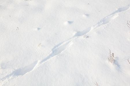animal tracks: Le tracce degli animali sulla neve nel bosco Archivio Fotografico