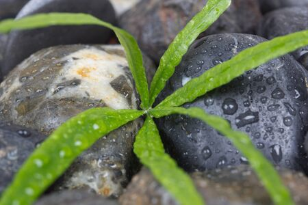 plainness: Sea smooth stones and green leaves
