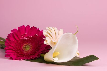 Bouquet of flowers on a pink background Stock Photo - 18342965