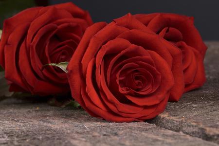 rosas rojas: Tres rosas rojas sobre un fondo de madera