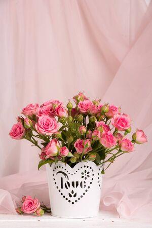 scarlet: Branch little scarlet roses on a pink background
