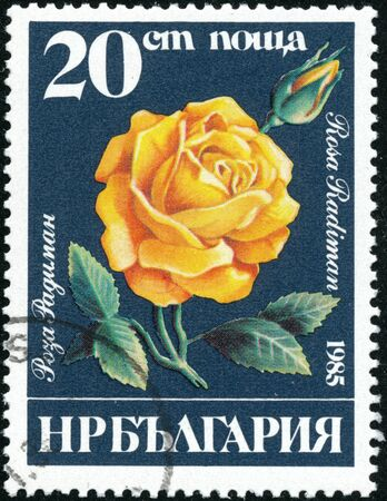 POLTAVA, UKRAINE - October 17, 2019. Vintage stamp printed in Bulgaria circa 1985 show flowers rosa