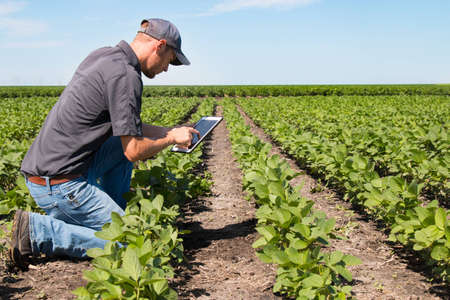 agronomist: Agronomist Using a Tablet in an Agricultural Field
