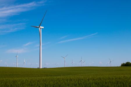 Wind turbines in a field of corn.