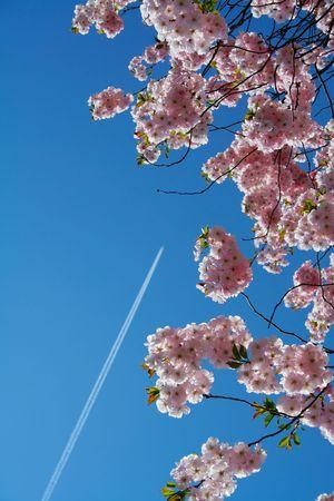 globetrotter: Flying to the land of sakura