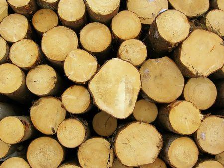stocked: Stocked logs Stock Photo