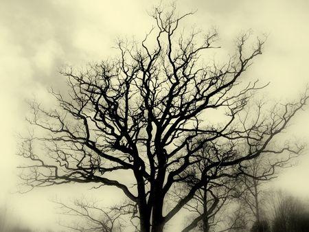 gloomy: Misty tree silhouette