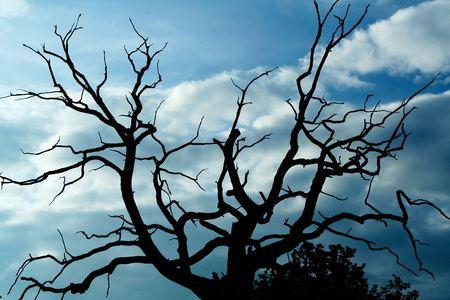 gloomy: Gloomy bare oak Stock Photo