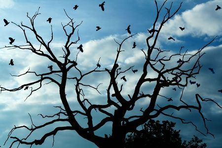 solidity: Gloomy bare oak and crows