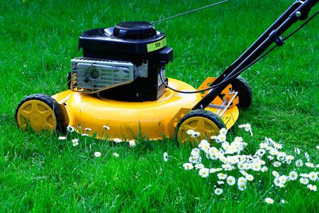 Lawn mower daisies photo