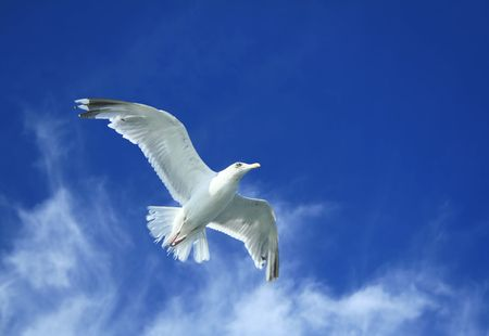 pursue: Spread your wings and take to the sky Stock Photo