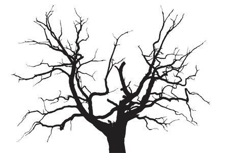 strong roots: Gloomy dead oak tree