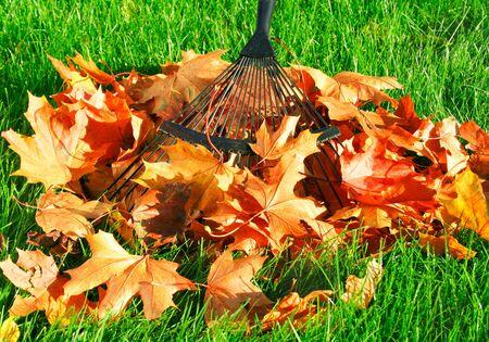 Raking the autumn leaves Stock Photo - 774159