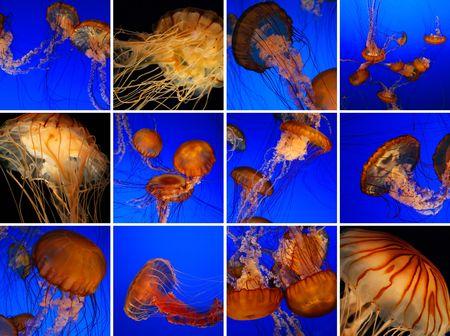 plancton: Medusas collage Foto de archivo