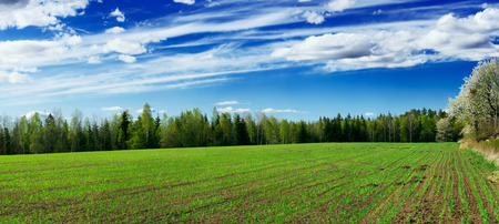 Springtime scenery of a ploughed field with young sprouts of crops and a beautiful cloudscape Stock Photo - 1536888