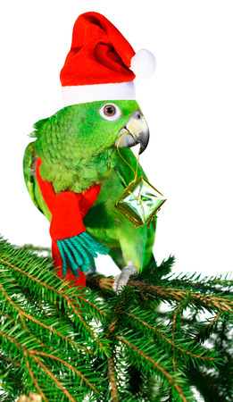 Green amazon parrot holding a golden gift parcel Stock Photo