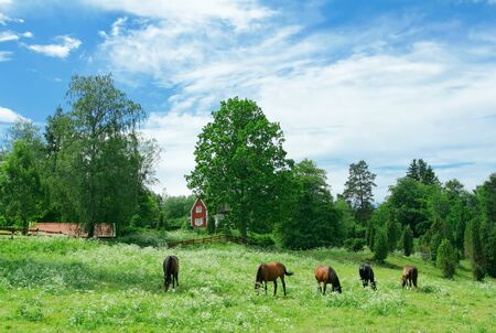 Swedish villa and gazing horses Stock Photo - 1536894