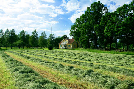 Rows of drying hay in front of Swedish villa house Stock Photo - 1536900