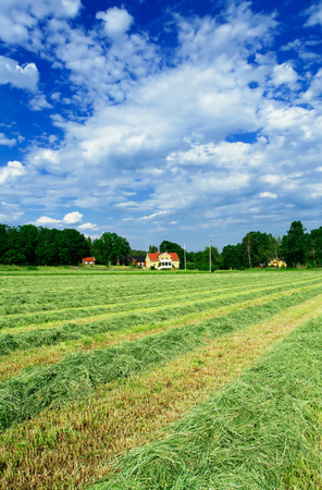Rows of drying hay in front of Swedish villa house Stock Photo - 1536898