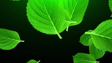 Falling large green leaves, 3D rendering. Computer generated beautiful abstract background