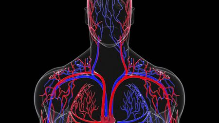 Rotating model of the human circulatory system from head to toe. 3d rendering blood vessels. The medical background, computer generated. Archivio Fotografico