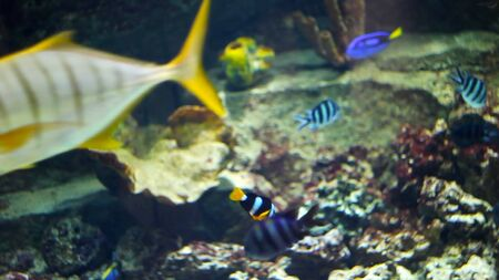 large aquarium with different kinds of fish.