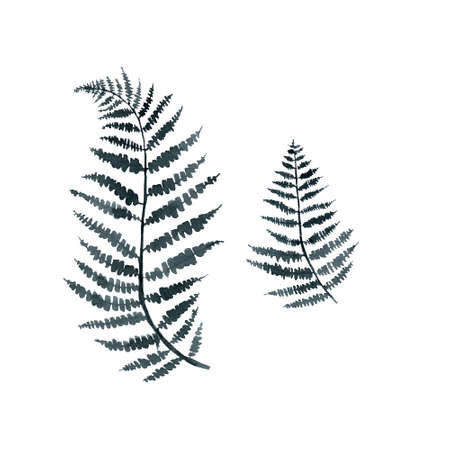 fern branch, indigo blue watercolor hand drawing, Standard-Bild
