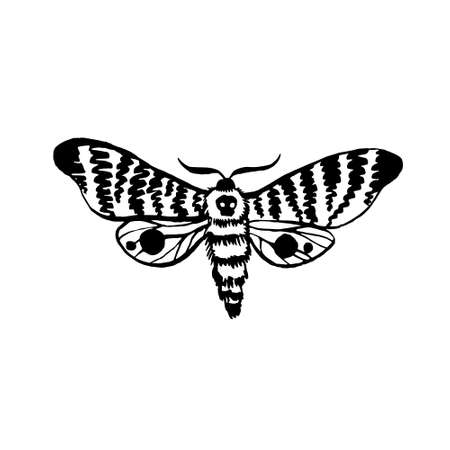 vector moth, night butterfly drawing, hand drawing silhouette illustration