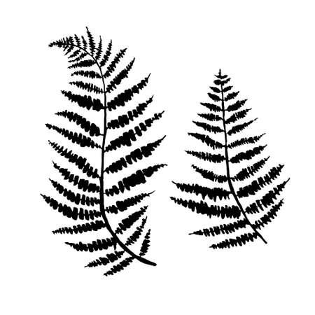 fern leaf vector, ink plant outline, hand drawing, black silhouette illustration 向量圖像