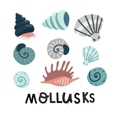 set mollusks and starfish, sea ocean, lettering vector illustration hand drawing