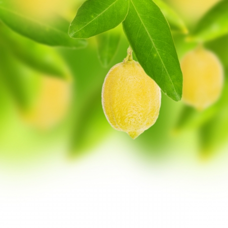 Fresh lemon with green leaves