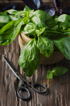 Bunch of fresh basil on the vintage table, selective focus Stock Photo