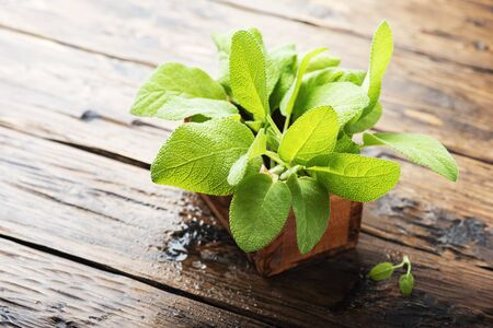 Salvia officinalis. Sage leaves on old wooden table. Garden sage. - selective focus Image Stockfoto