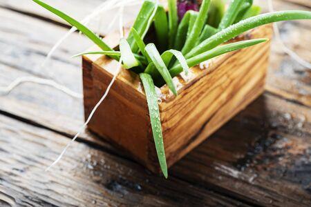 Fresh spring green onion on wooden background - selectie focus Image Banco de Imagens